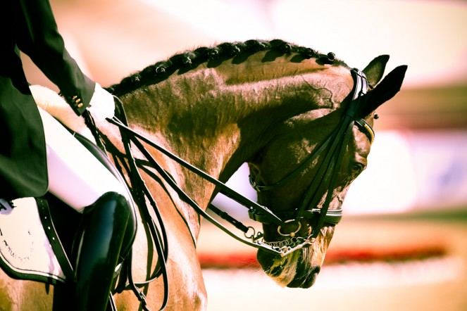 Nicolay sports + entertainment Arab Games day 3 equestrian